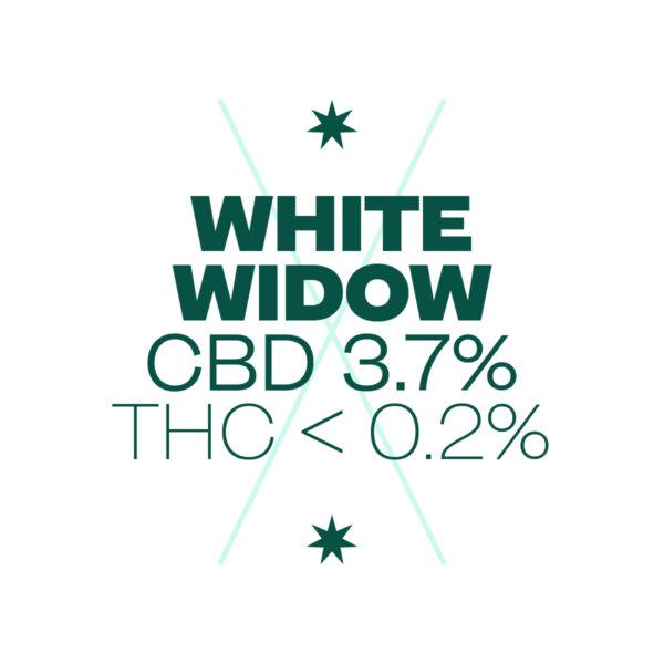 ligne verte bandeaux white widow site px px