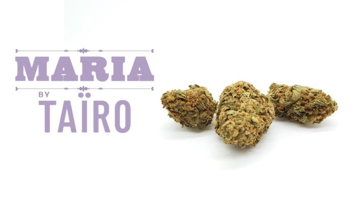 """MARIA"" By TAÏRO Ligne Verte – CBD Products"